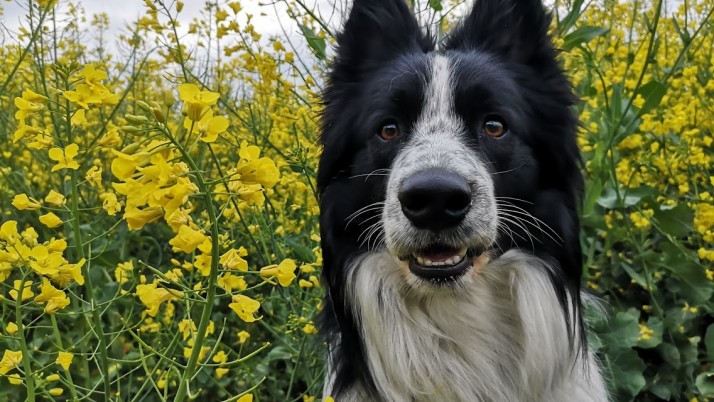Czy posiadanie psa może zabezpieczyć nas przed koronawirusem?